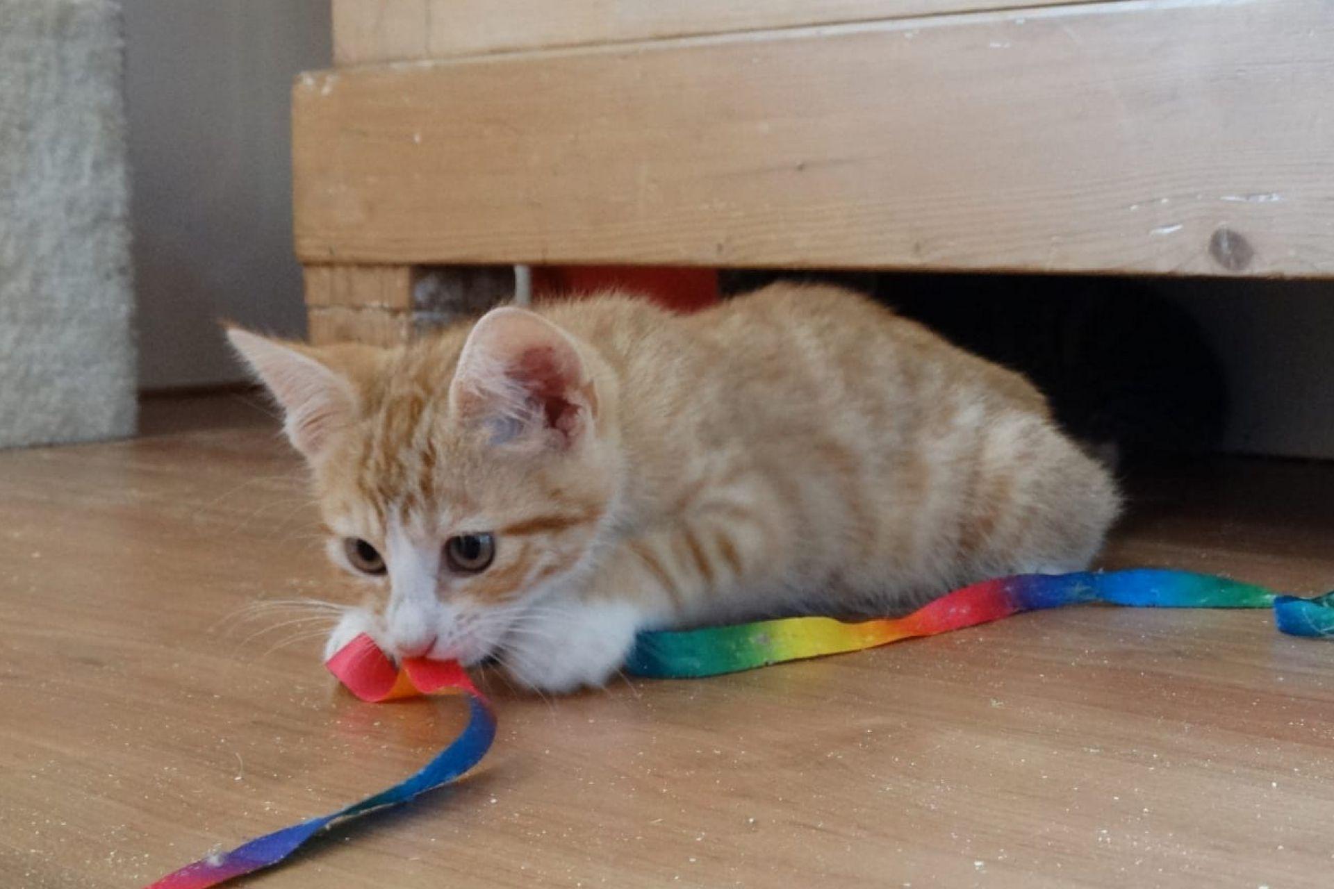 Kitten 1102768