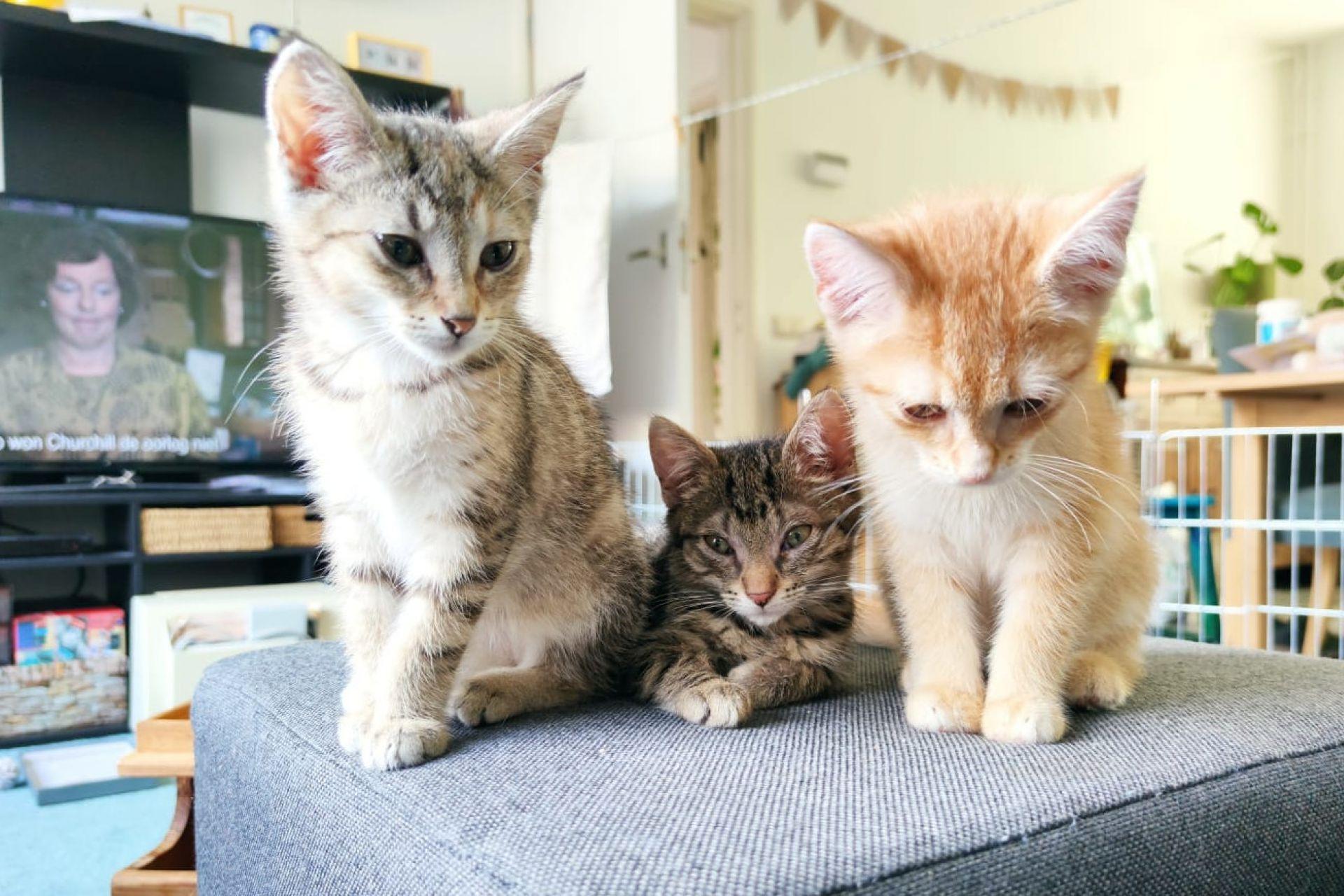 kitten 1101267