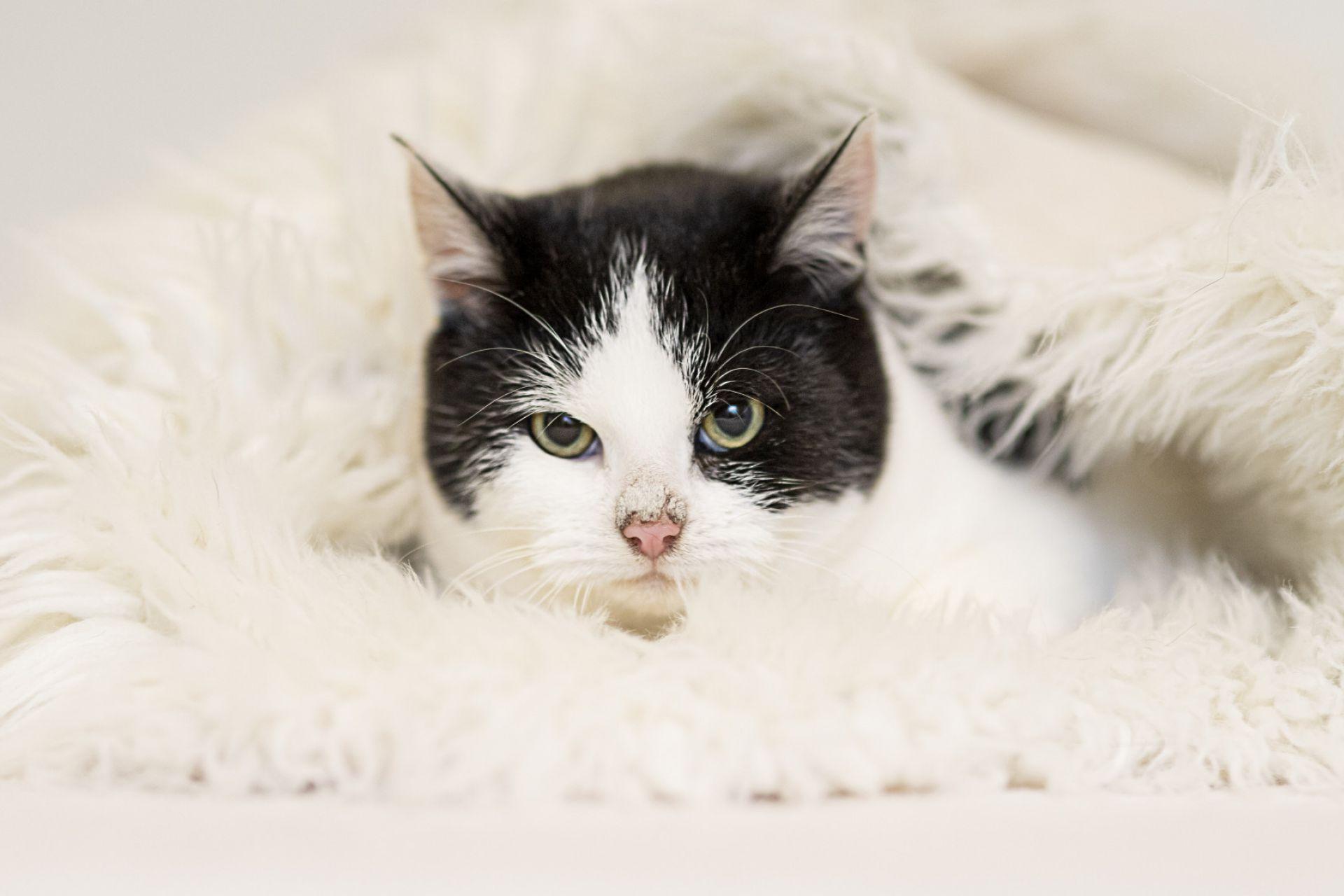 Kitten 1108306