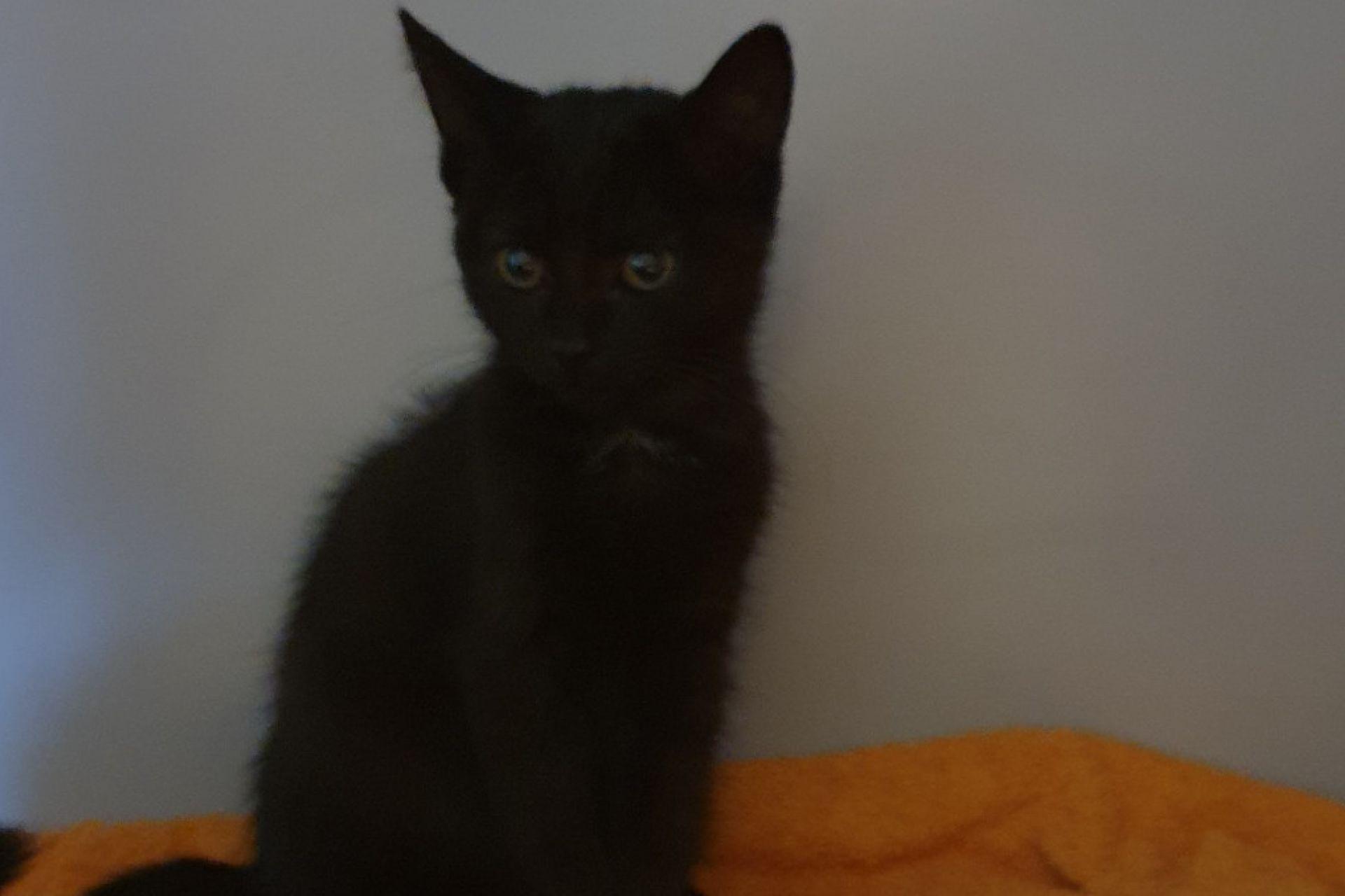kitten Charly