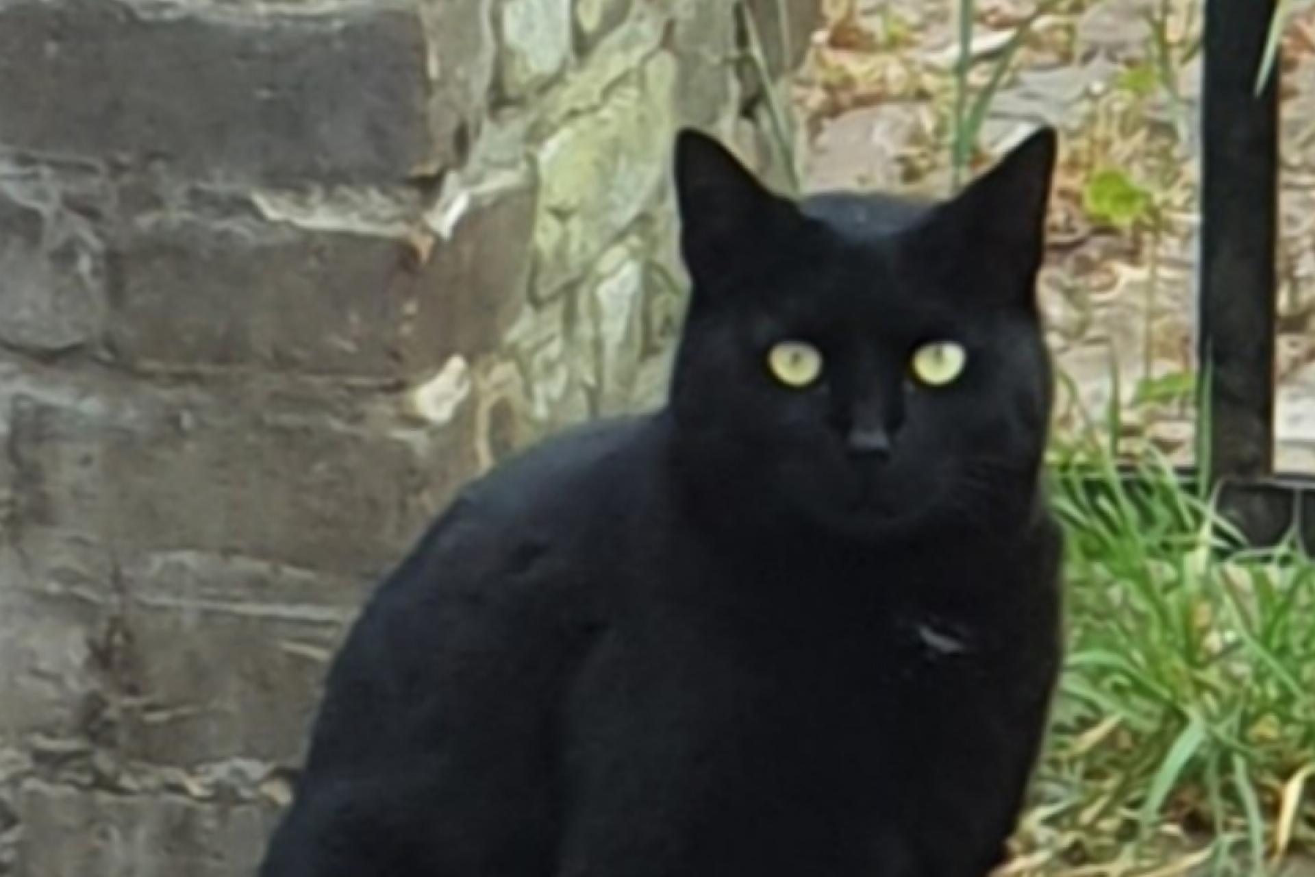 Zwarte poes, kat, omgeving centrum Doesburg. Vermist vanaf 20-08-2020