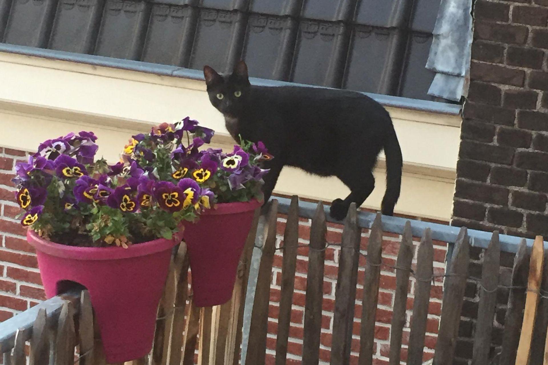 Dexter op het balkon, mei 2020
