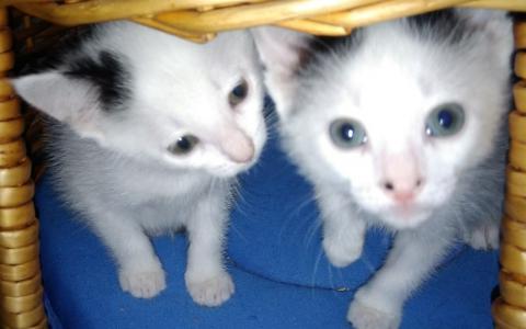 Kittens 1099818, 1099826