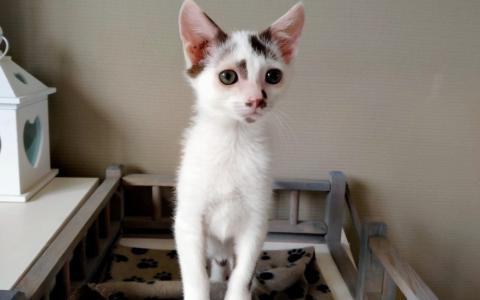 Kitten Toke 1102359
