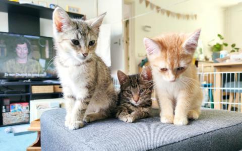 kitten 1101269, 1101267