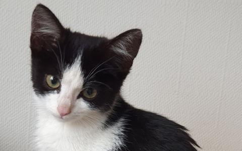 Kitten 1104447