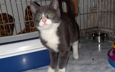 Kitten Edje