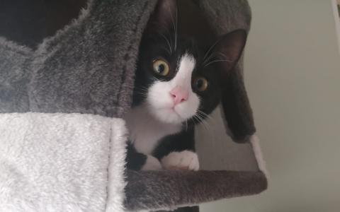 Kitten Oebe en Sieb
