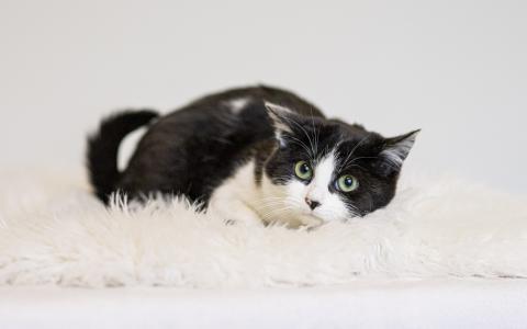 Kitten Flupke 1108145