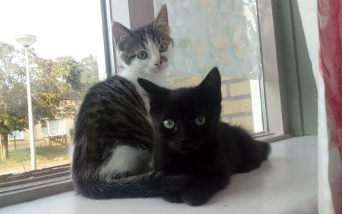 kittens Casper en Cor