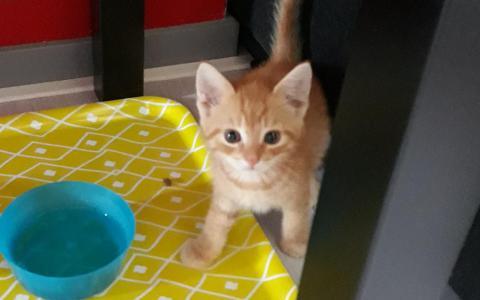 kitten Murphy
