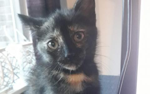 kitten Emori