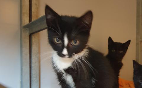 kitten Thato