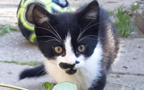 kitten Ewout