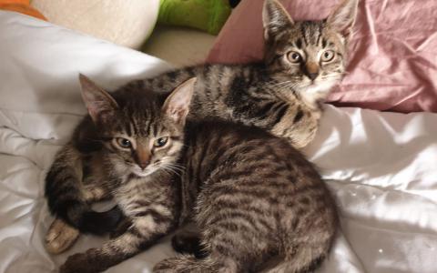 kittens Kaatje en Karla